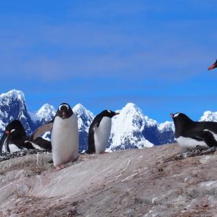 Antarctique Croisière Voilier
