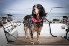 Matelot LifeSong Sailing
